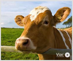 Kŕmne zmesi pre hospodárske zvieratá